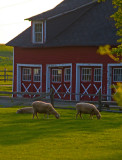 Knox Barn