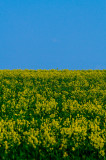 Spring Field and Sky