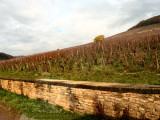 this is where it grows...the Corton Charlemagne