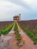 Clos de Vougeot vineyard