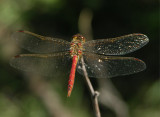 Dragonflies from China and Tibet