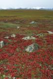 Arctic Tundra, Brooks Range AK