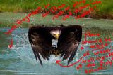 eagleam4comment.jpg