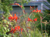 My Garden 2007