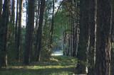 WIELKOPOLSKA ,LANDSCAPE ,MARYLIN AND CLOSE AERIA