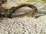 Sletten Strand 14.11.04 71.jpg