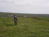 Arctic veget above Sherbert Hills
