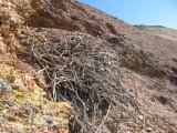 Old golden eagle nest in crags