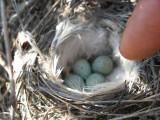 Cute little eggs!