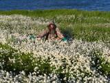 Wonderful cottongrass!