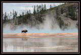 Yellowstone May 2007
