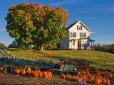 Autumn harvest 2007