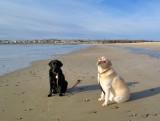 Beach Dog Project