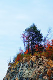 algonquin_in_the_fall_2007