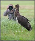 Black Stork / Toon