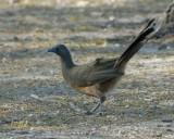 misc_large_birds