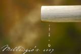Dripping.jpg