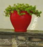 Red-pot.jpg