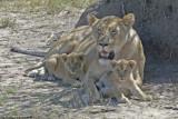 Kenya - Masai Mara (2006)