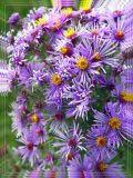 Wild Flowers, Fussen, Germany
