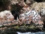 Bird Colonies on Paracas Island