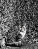 Gato-Comando