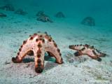 2006.04.13 Diving at Puerto Galera