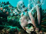 20061227 Dive2 017.jpg