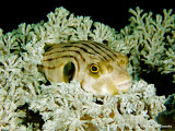 20061228 Dive2 025.jpg