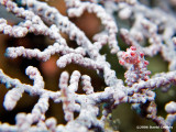 20061229 Dive1 007.jpg