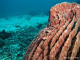 20061229 Dive2 002.jpg