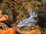 20061229 Dive2 009.jpg