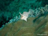 20061229 Dive2 013.jpg