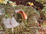 20061229 Dive3 005.jpg