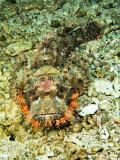 20061230 Dive1 016.jpg