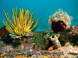 20061230 Dive2 003.jpg