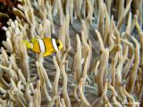 20061230 Dive2 012.jpg