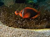20061230 Dive2 020.jpg