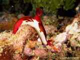20061230 Dive3 005.jpg