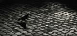 Pidgeon Walk