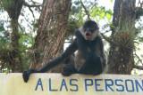 As I was leaving Parque Naciones Unidas, I ran into a vendor who had this monkey.