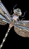 Dragonfly Sunbathing