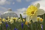 springflowers2006