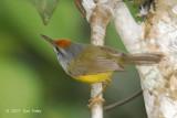 Tailorbird, Mountain @ Jelai Resort