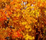 Fall on Ott Lane