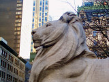 A literary Lion
