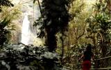 Akaka Falls on the island of Hawaii