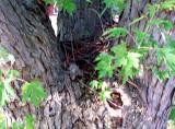 Front yard tree.jpg