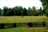 Murfreesboro battlefield