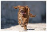 Run Bony Run